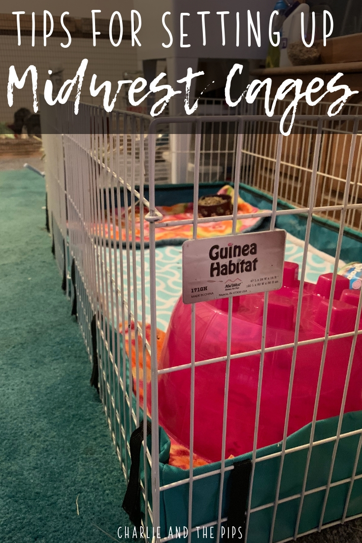 Midwest Guinea pig cages are a popular way to house cavys indoors. When it comes to Guinea pig habitats Midwest makes some great options that go well with fleece bedding! #guineapigs #midwestcages