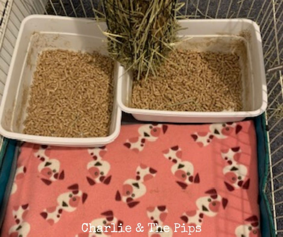 litterbox area for Guinea PigsI