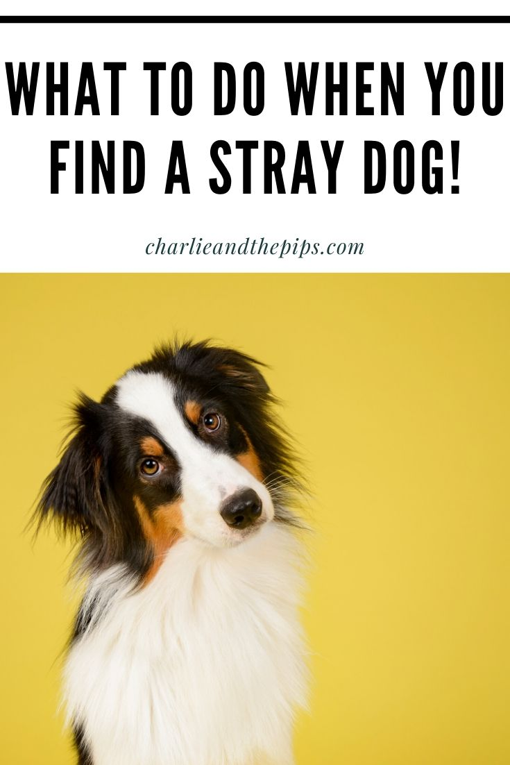 Pin showing a stray dog.